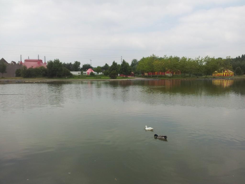 pêche à LOMME dans Non classé 20140531_1434552-1024x768